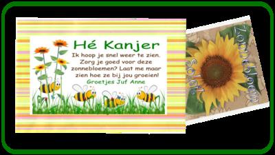 Happy stripes Zonnebloem